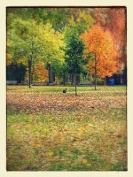 20141026_104031-EFFECTS